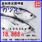 高知沖 天然一本釣り 【 カツオ/鰹 】 中型 宇和海の幸問屋 送料無料