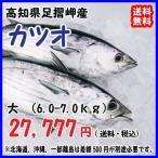 高知沖 天然一本釣り 【 カツオ/鰹 】 大型 宇和海の幸問屋 送料無料