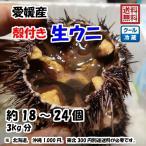 愛媛 天然 ( 殻付き 生ウニ ) 約18〜24個 3kg 紫ウニ 赤ウニ 素潜り海士 送料無料 浜から直送 宇和海の幸問屋