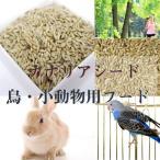業務用飼料 バードフード カナリアシード 20kg ハムスター・リス・小鳥用 ペットフード