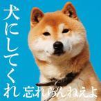 犬にしてくれ(初回限定盤)(DVD付) / 忘れらんねえよ (CD)
