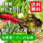 ショッピングお試しセット 野菜セット 送料無料 無農薬 無化学肥料 さいのね畑7種 卵付き お試し