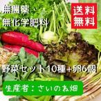 ショッピングさい 野菜セット 送料無料 無農薬 無化学肥料 さいのね畑10種 卵付き お試し