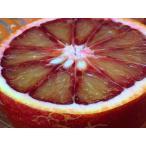 ブラッドオレンジ バラ詰5Kg 愛媛県産 モロ種 今が旬 国産 オレンジ