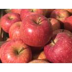 サンふじ 長野県産 北信州山ノ内 サンフジ 堀米さん家の美味しいリンゴ 10kg 林檎/りんご/リンゴ ギフト お歳暮