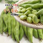 そら豆 セール 愛媛県産 そらまめ 蚕豆 ソラマメ 肉厚 ホクホク 訳あり 1.5kg 送料無料
