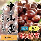 中山栗 愛媛県産 日本一の栗 大粒 甘くてホクホクです M〜L 5kg 送料無料