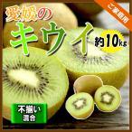 キウイ 国産 ヘイワードキウイ 愛媛県産 家庭用 グリーンキウイ 送料無料 約10kg