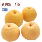 新興梨4個 新潟県産低農薬栽培  送料無料