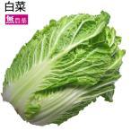 白菜 4玉 低農薬栽培 送料無料