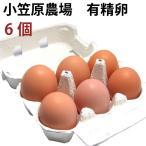 有精卵6個 小笠原さんの平飼自然養鶏の卵6個 送料別