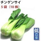 チンゲンサイ 新潟県産 低農薬栽培 5把  送料無料