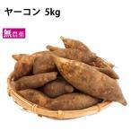 ヤーコン 2kg  北海道産 無農薬栽培  送料無料