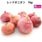 レッドオニオン 無農薬栽培 1kg 送料無料