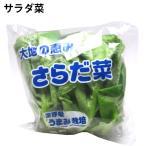 サラダ菜 低農薬 5玉 送料無料