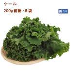 送料無料 国産 イタリア野菜 ケール(ミックス)  50g 4袋 無農薬 千葉産