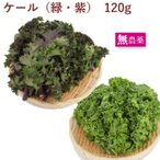 送料込 国産 イタリア野菜 ケール(緑または紫)  150g 4袋 無農薬 千葉産