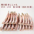 鵡川漁業協同組合 北海道鵡川産本ししゃも 雄・雌各10尾 1セット 送料無料
