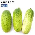 ミニきゅうり 1.2kg 低農薬 送料無料