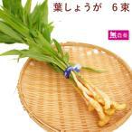 国産 葉生姜 葉ショウガ 葉しょうが 無農薬  5束 茨城県産 送料込