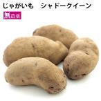じゃがいも ジャガイモ シャドークィーン 5kg 北海道産 無農薬栽培 紫色のじゃがいも 送料込