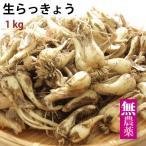 【予約】生らっきょう 土付き 送料込 鳥取市福部産 無農薬栽培 1kg ※6/11以降の発送