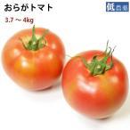 送料無料 国産 とまと トマト おらがトマト ケース 3.7〜4kg 福島県産 低農薬栽培