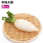 ポイント消化 食品 辛味大根 5本 栃木県産 無農薬栽培 送料込