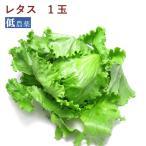 レタス1玉  千葉県産低農薬栽培レタス 送料別