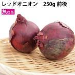 レッドオニオン 250g  無農薬栽培。 送料別 ポイント消化 食品