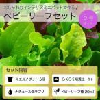 【1円セール商品】ベビーリーフセット ミエルノポット5号付き (宅配便配送商品)