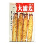 野菜の種/種子 大浦太・ごぼう 10ml (メール便可能)