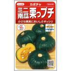 野菜の種/種子 栗坊・ミニかぼちゃ 8粒 (メール便可能)サカタのタネ