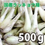 野菜・種/苗 国産ラッキョウ・生もの種 量り売り500g 【6月下旬頃より順次発送】