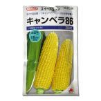 野菜の種/種子 キャンベラ86・とうもろこし 200粒(メール便発送)タキイ種苗