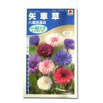 花の種 矢車草[八重咲混合] 1.5ml(メール便可能)