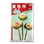 花の種 葉牡丹[F1晴姿] 0.5ml(メール便可能)
