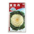 花の種 葉牡丹[F1白はと] 0.5ml(メール便可能)