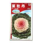 花の種 葉牡丹[F1つぐみ] 0.5ml(メール便可能)
