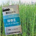 緑春・ライムギ(ライ麦)1kg 緑肥/飼料/牧草作物/種