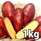 野菜・種/苗[春じゃがいも種芋]シェリー じゃがいも種芋・生もの種 量り売り1kg