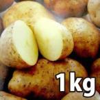 野菜・種/苗[春じゃがいも種芋]北海道産 十勝こがね トカチコガネ 十勝コガネ じゃがいも種芋・生もの種 混玉<SS〜Lサイズ>量り売り1kg