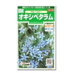 花の種 オキシペタラム[ブルースター] 0.5ml(メール便可能)