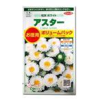 花の種 アスター[松本 ホワイト]ボリュームパック 3ml(メール便可能)