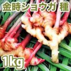 野菜・種/苗 千葉県産  金時生姜/赤芽しょうが・生もの種 種生姜 量り売り1kg
