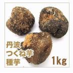野菜・種/苗 つくね芋/丹波つくね芋 山の芋・山芋・ヤマイモ 種芋・生もの種 約1kg[約4個]