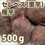 野菜・種/苗 セレベス/里芋 種芋・生もの種 量り売