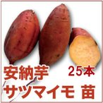野菜の苗 安納芋/あんのう芋・サツマイモ さつま サツマ 苗 25本入り