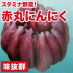 野菜・種/苗 スタミナ野菜 国産 赤丸にんにく種子 ニンニク りん片10球入