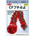 野菜の種/種子 CFプチぷよ・ミニトマト とまと  ペレット種子 11粒 (メール便可能)